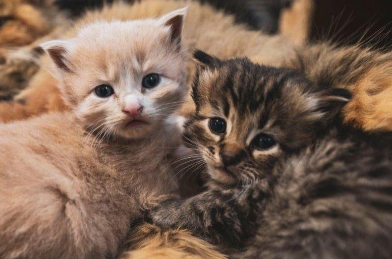 macska kölykök