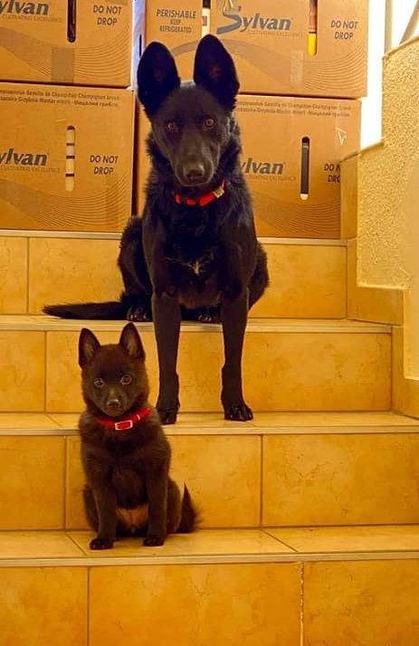Kis kutya és nagy kutya ül a  lépcsőn