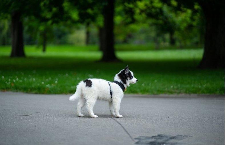 Kölyökkutya a parkban