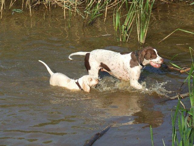 Kiskutya, mamájával a tóban