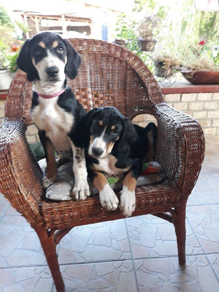 Kölyökkutyák a kerti fotelben