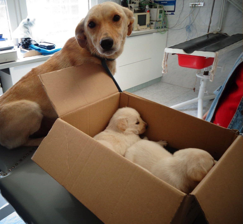 Mentett labrador család