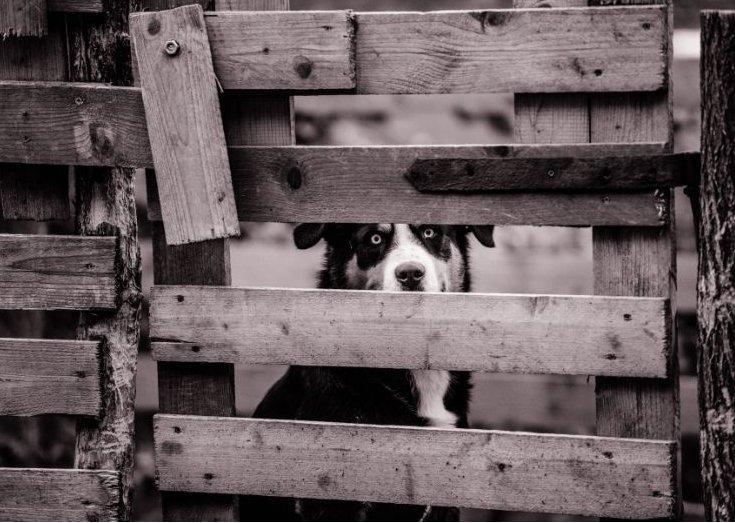 Kutya a kapu mögött