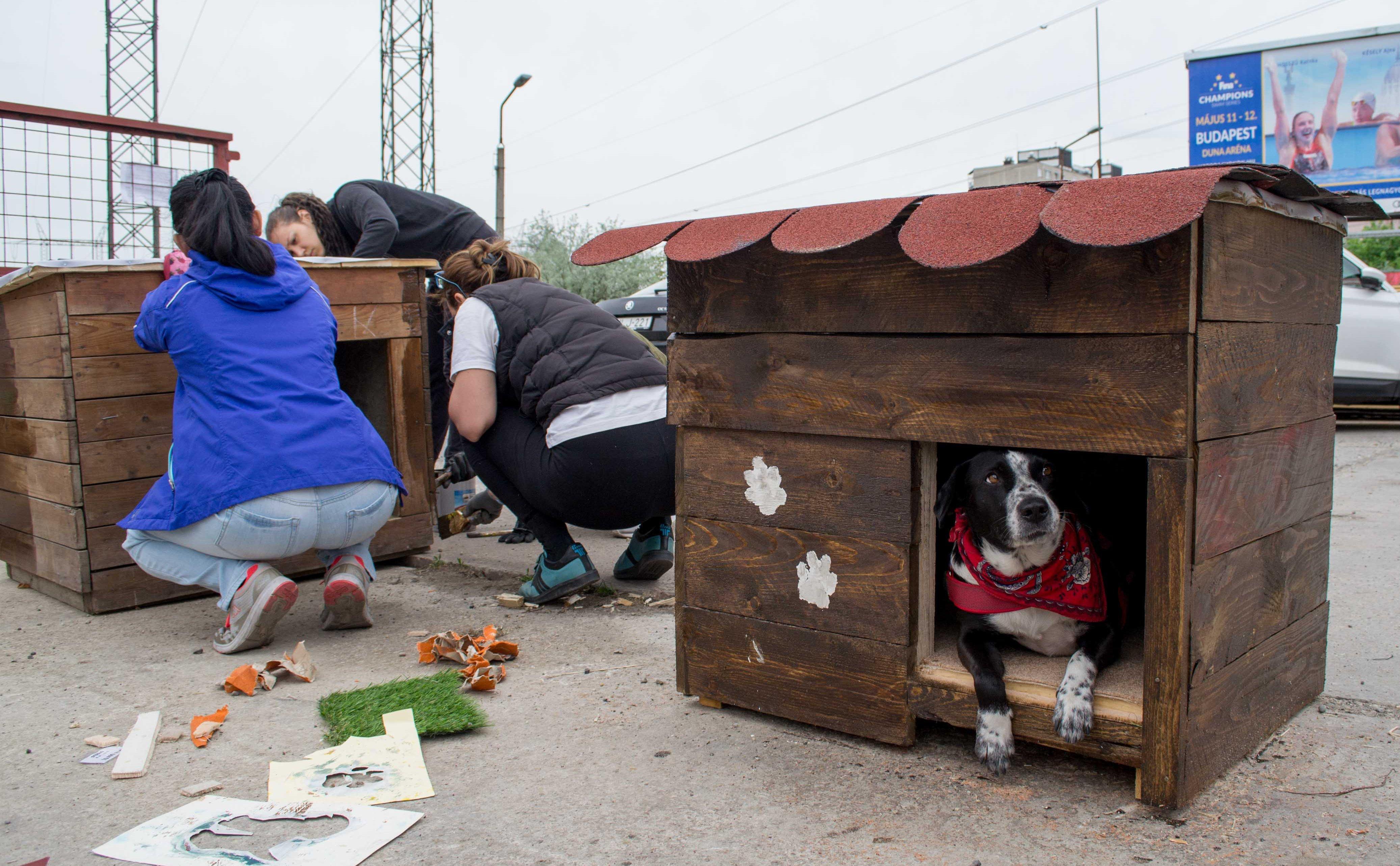 Menhelyi kutyaház építés