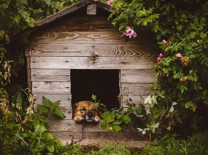 Kutya a kutyaházban