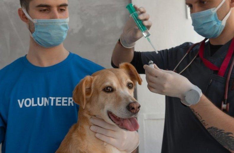 Kutya várja az injekciót