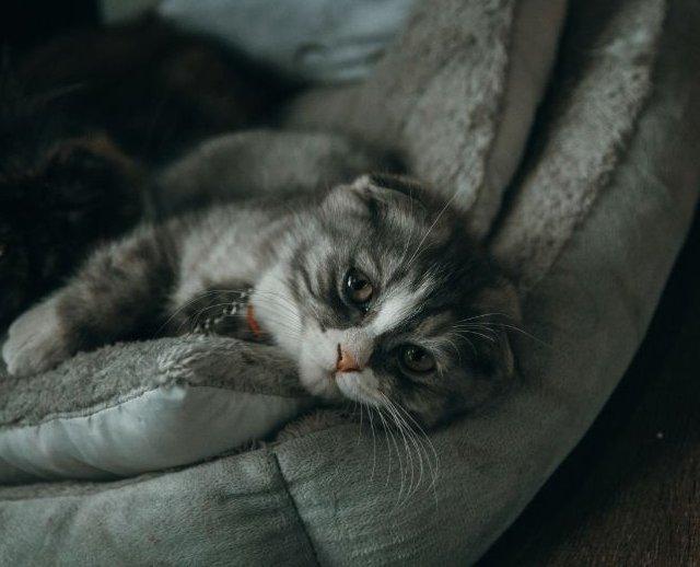 Cica a cica ágyban