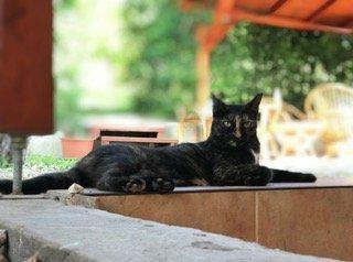 Macska a teraszon
