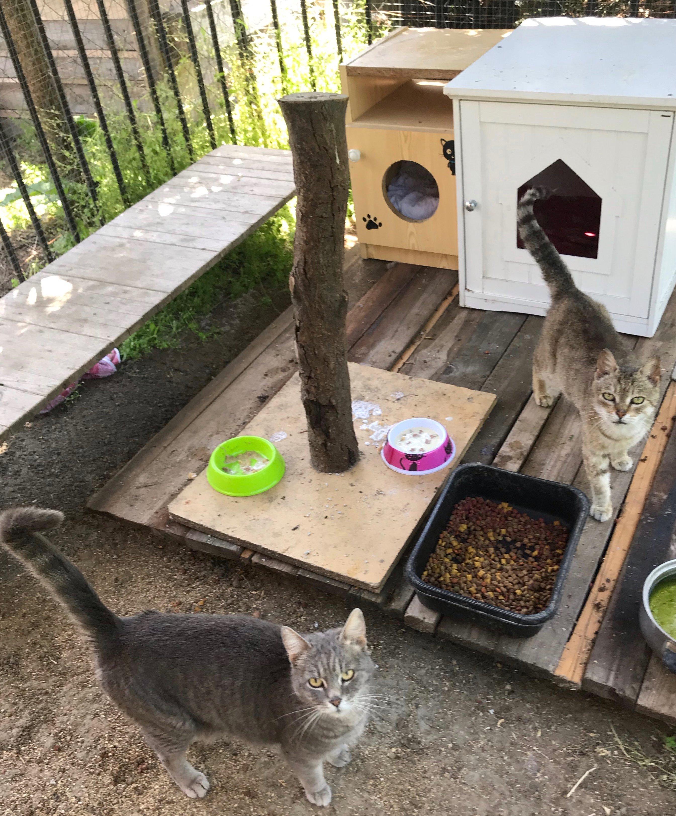 Mentett macskák