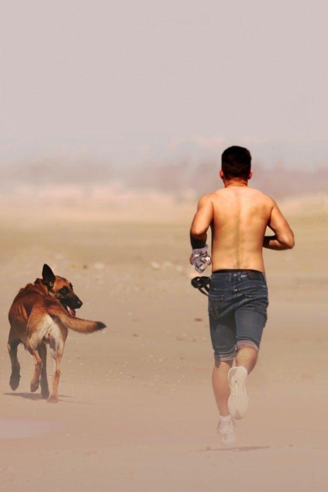 Malinois fut gazdájával