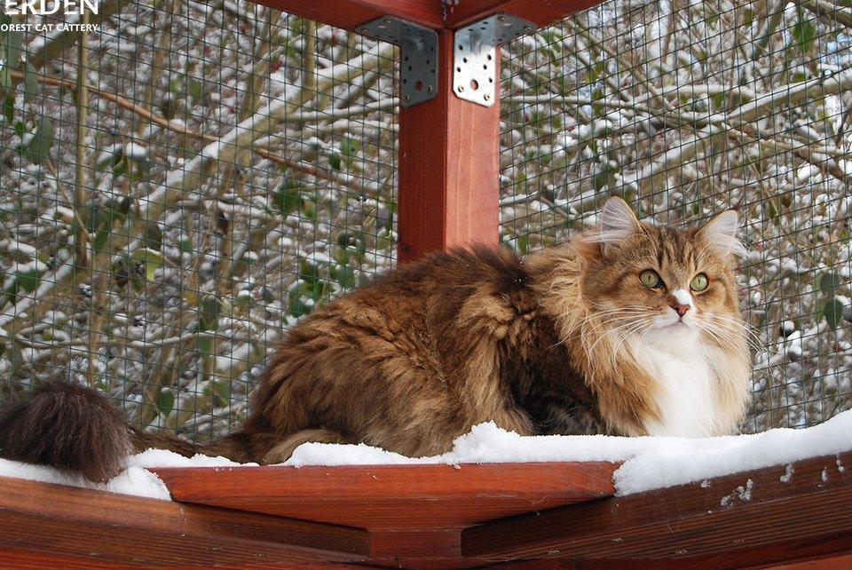 Macska a macska kifutó polcán