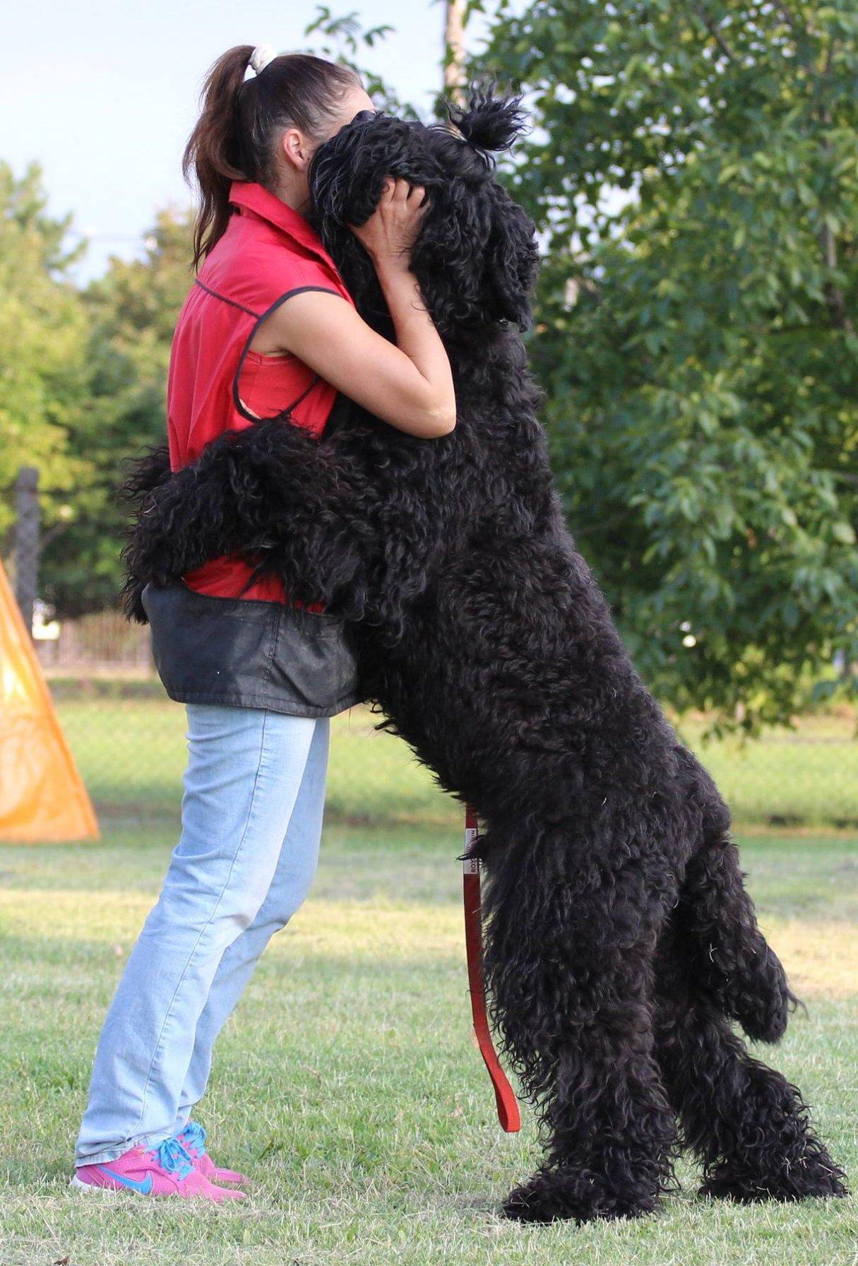 Orosz fekete terrier ölelgeti gazdáját