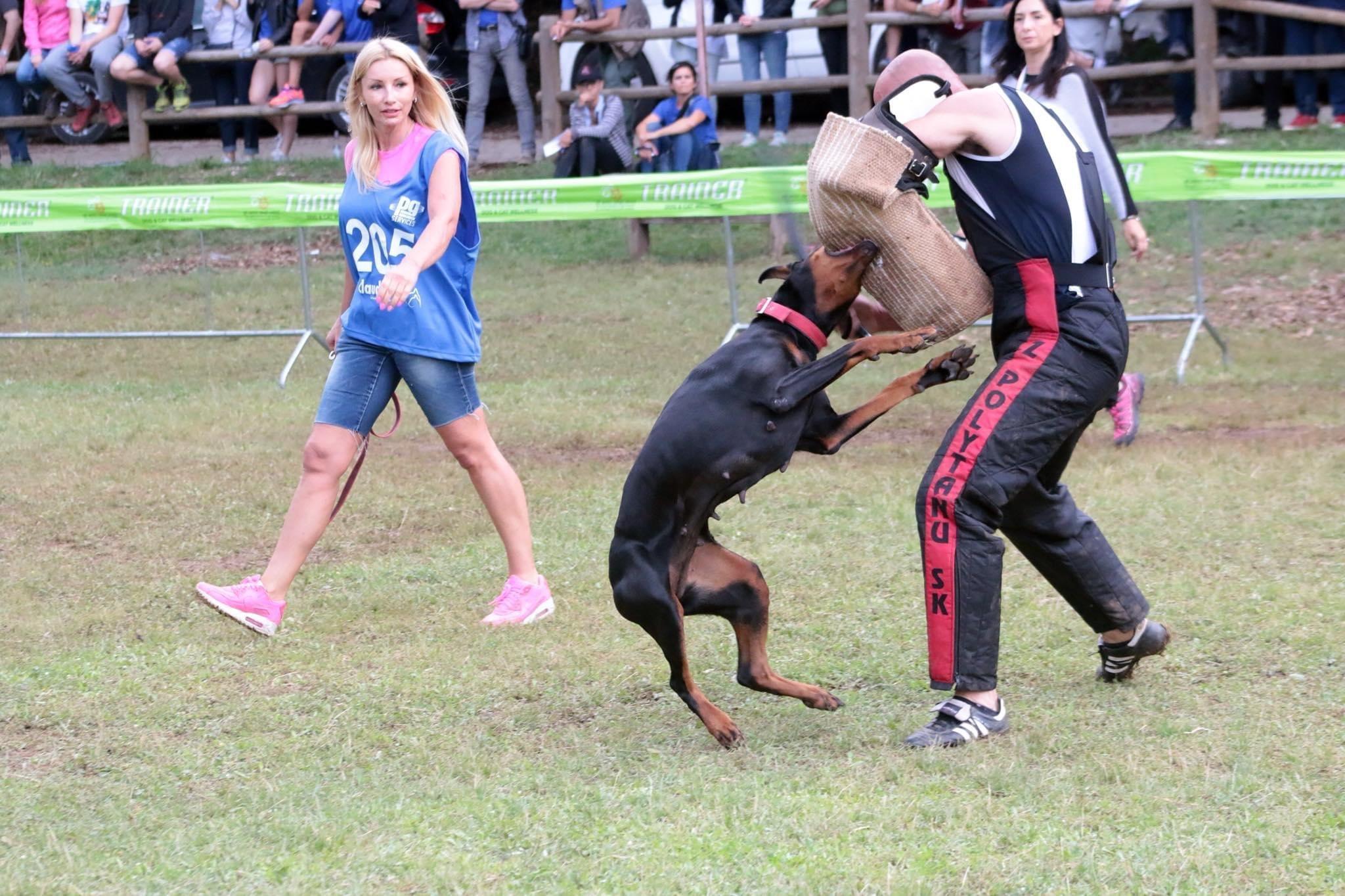 Dobermann őrző-védő verseny
