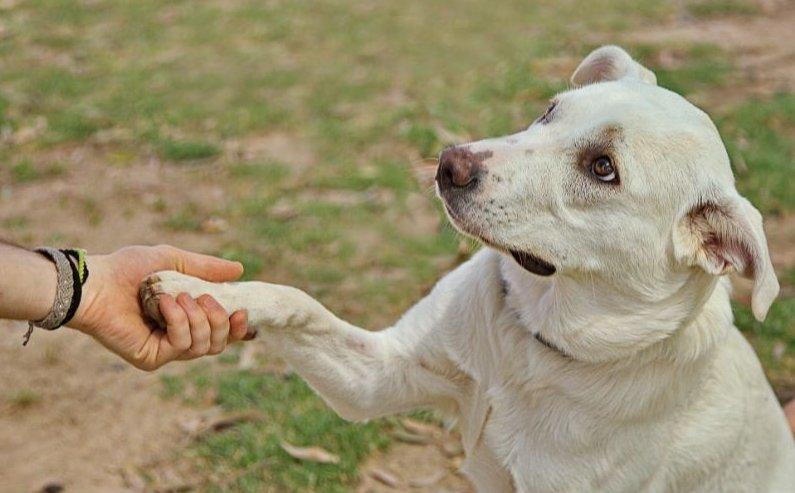 PAcsit adó kutya