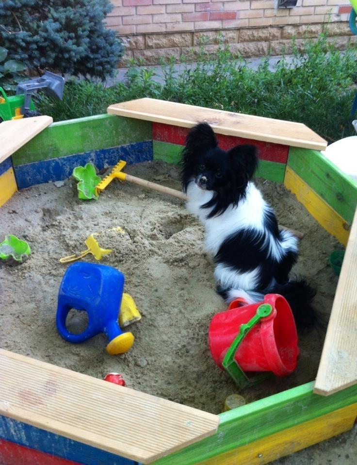 Kis kutya a homokozóban