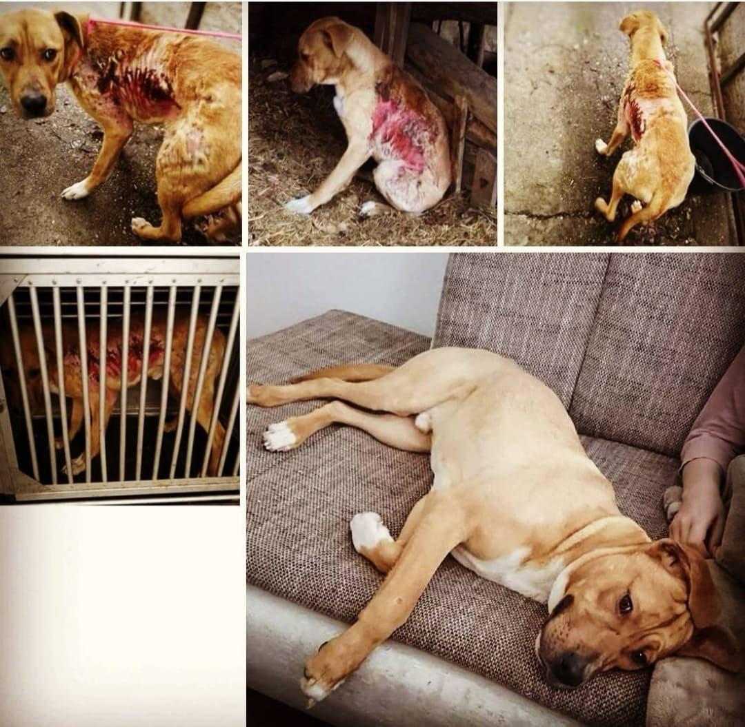 Mentett kutya PCAS állatmentők