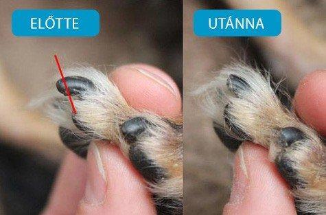 Helyes karomvágás, kép forrása: petnail.hu