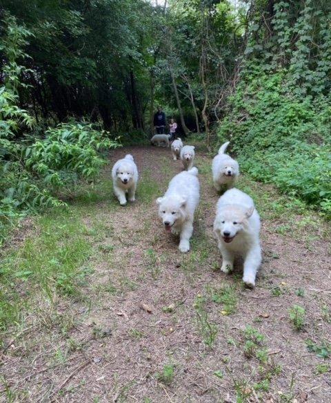 Kölyökkutyák az erdőben