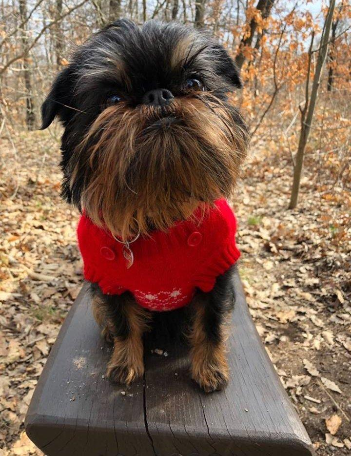 Kis kutya pulcsiban, az erdőben