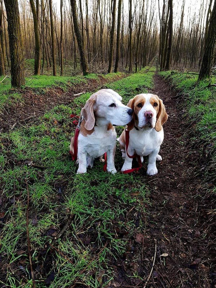 puszilkodó kutyák az erdőben