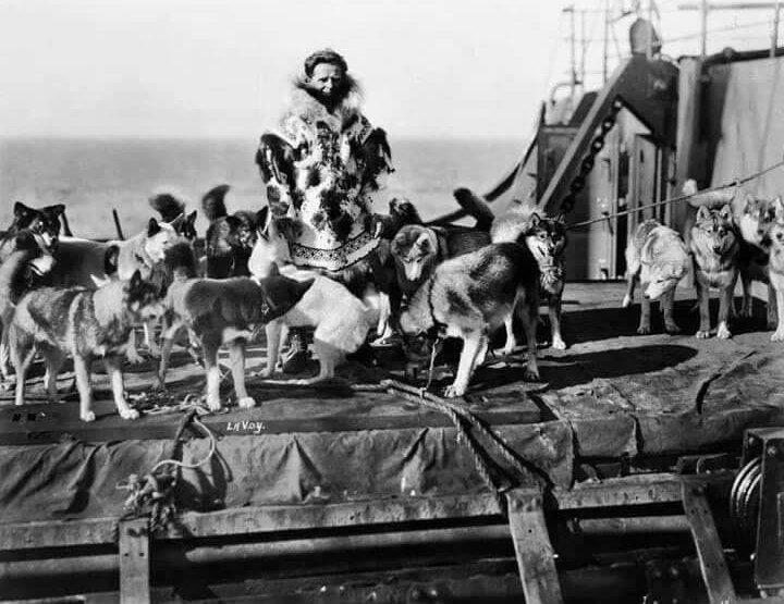 Szamojéd törzs kutyái