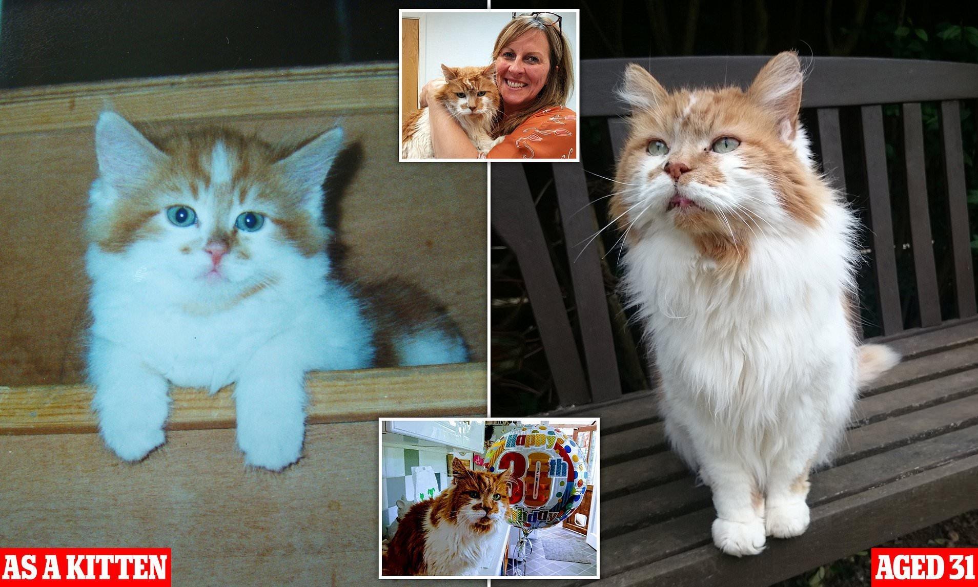 Rubble a legöregebb cica, forrás: dailymail.co.uk