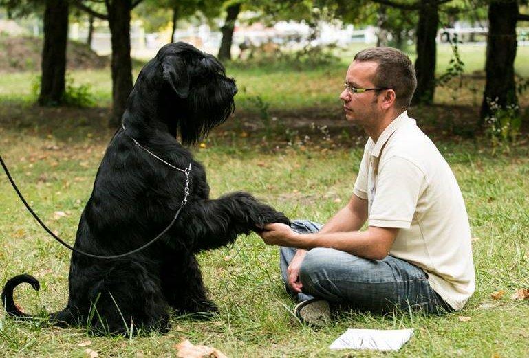 Nagy fekete kutya kezet fog gazdájával