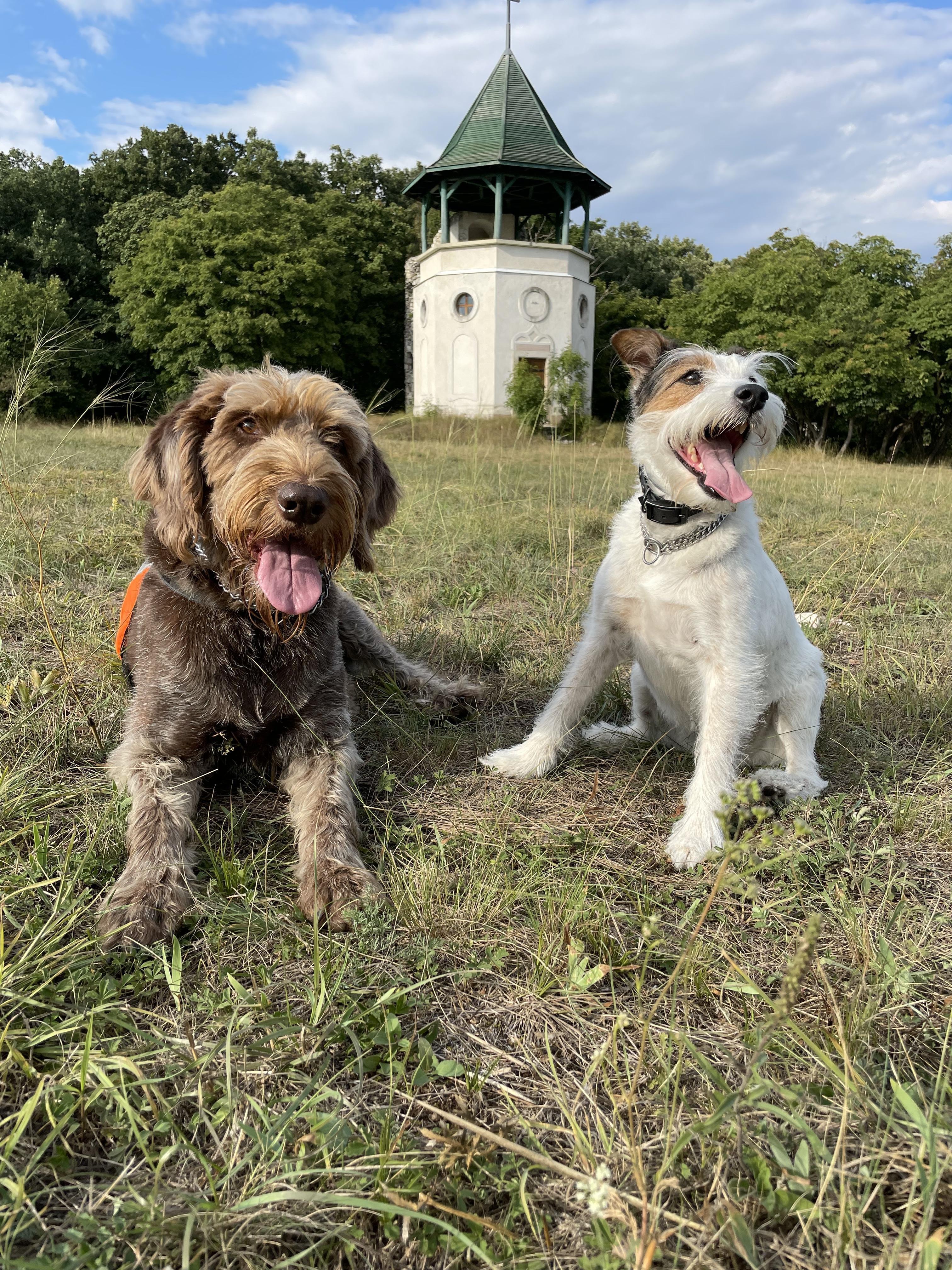 Két kutya a kilátó alatt