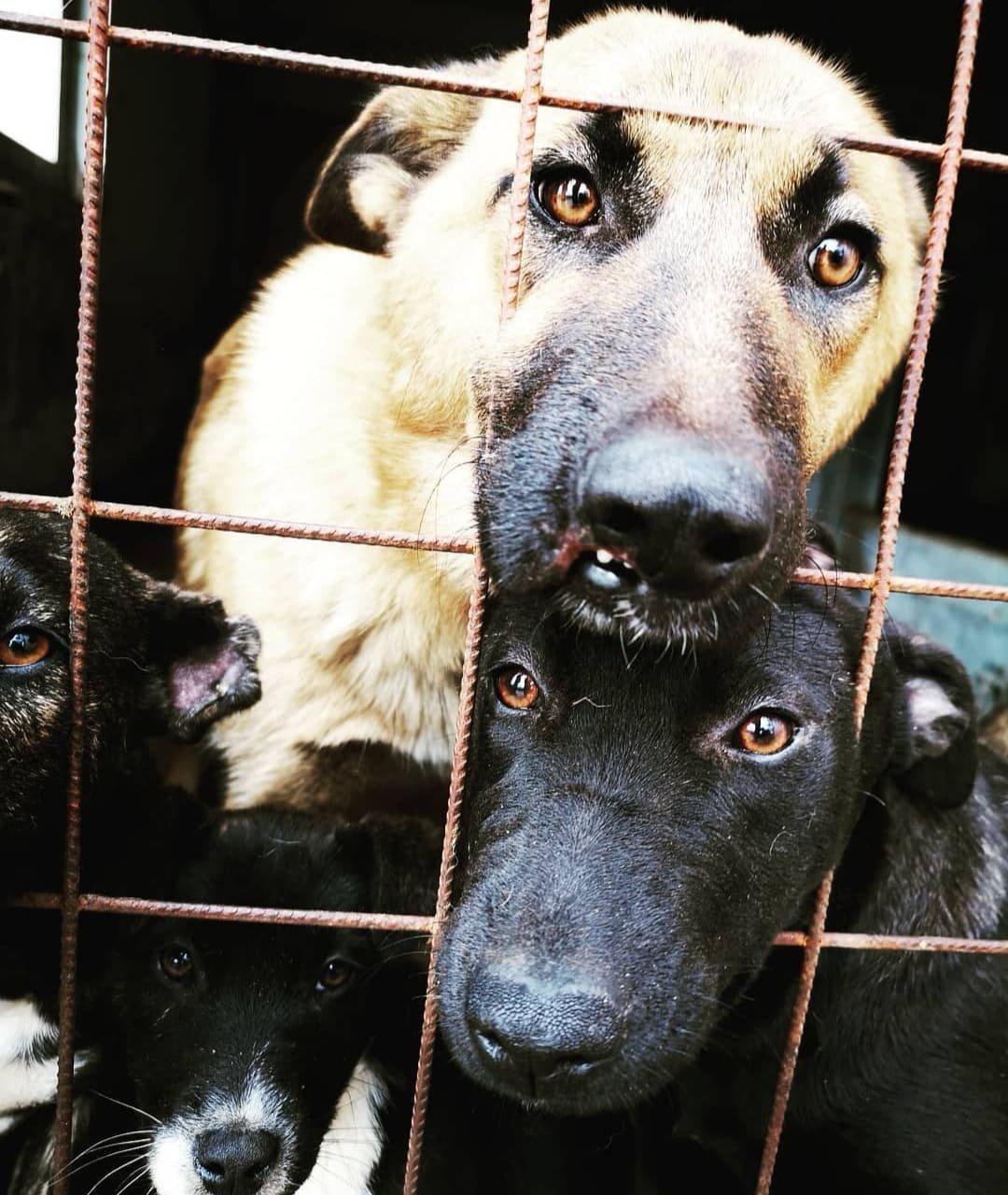 Sok kutya kennelben