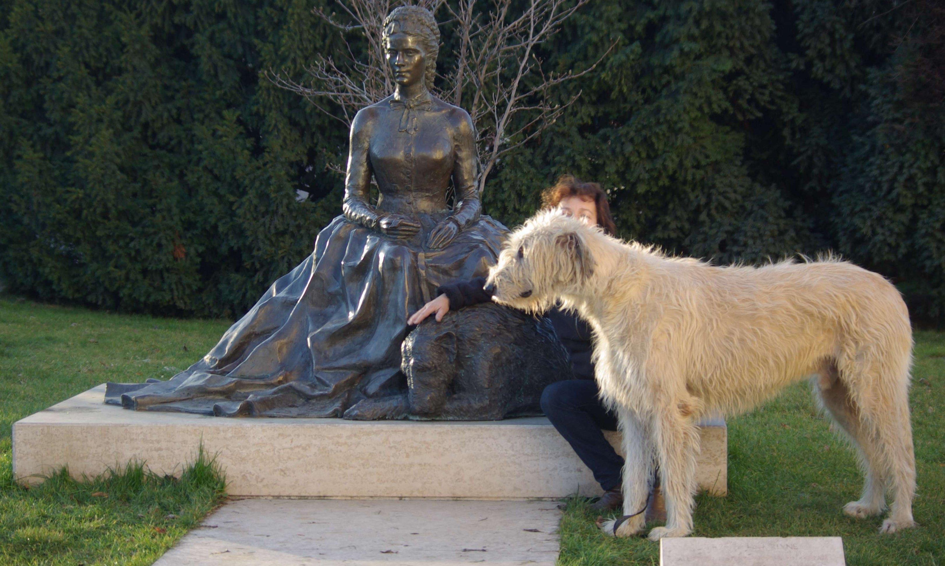 Ír farkasagár Sissi szobránál