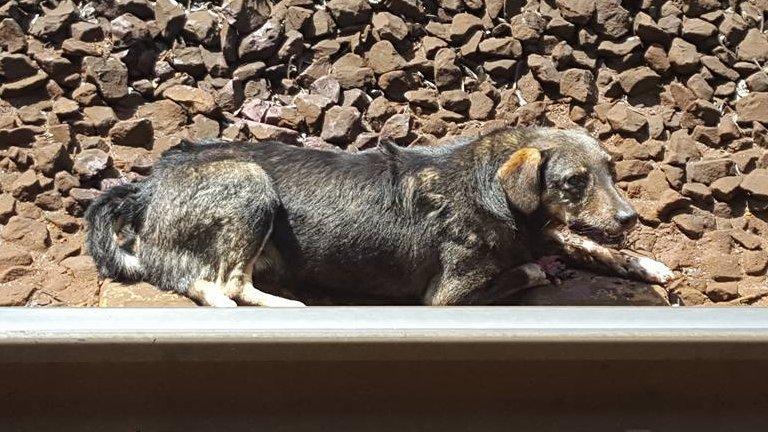 Vonat balesetes kutya