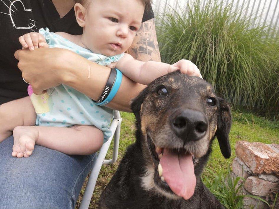 Mentett öreg kutya gyógyultan, családjával