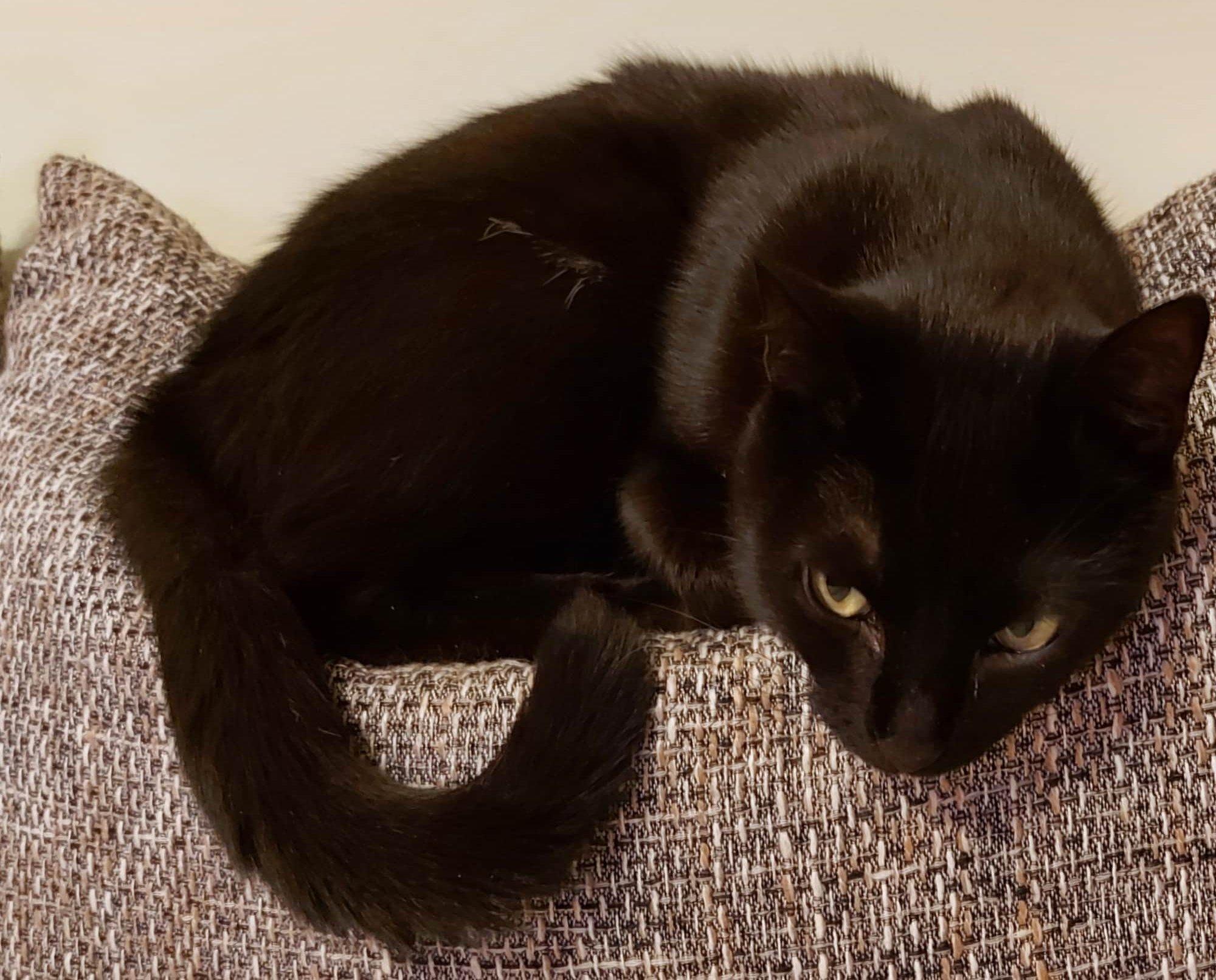 Gyógyult fekete cica