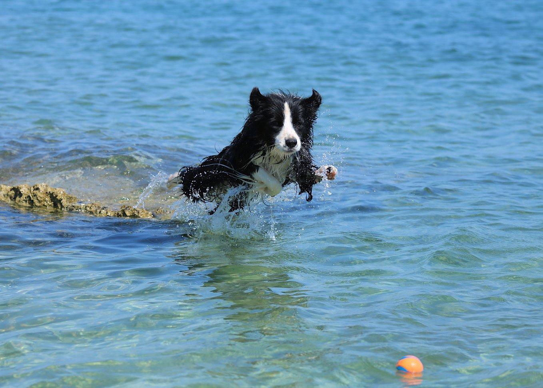 Vízben labdázó kutya