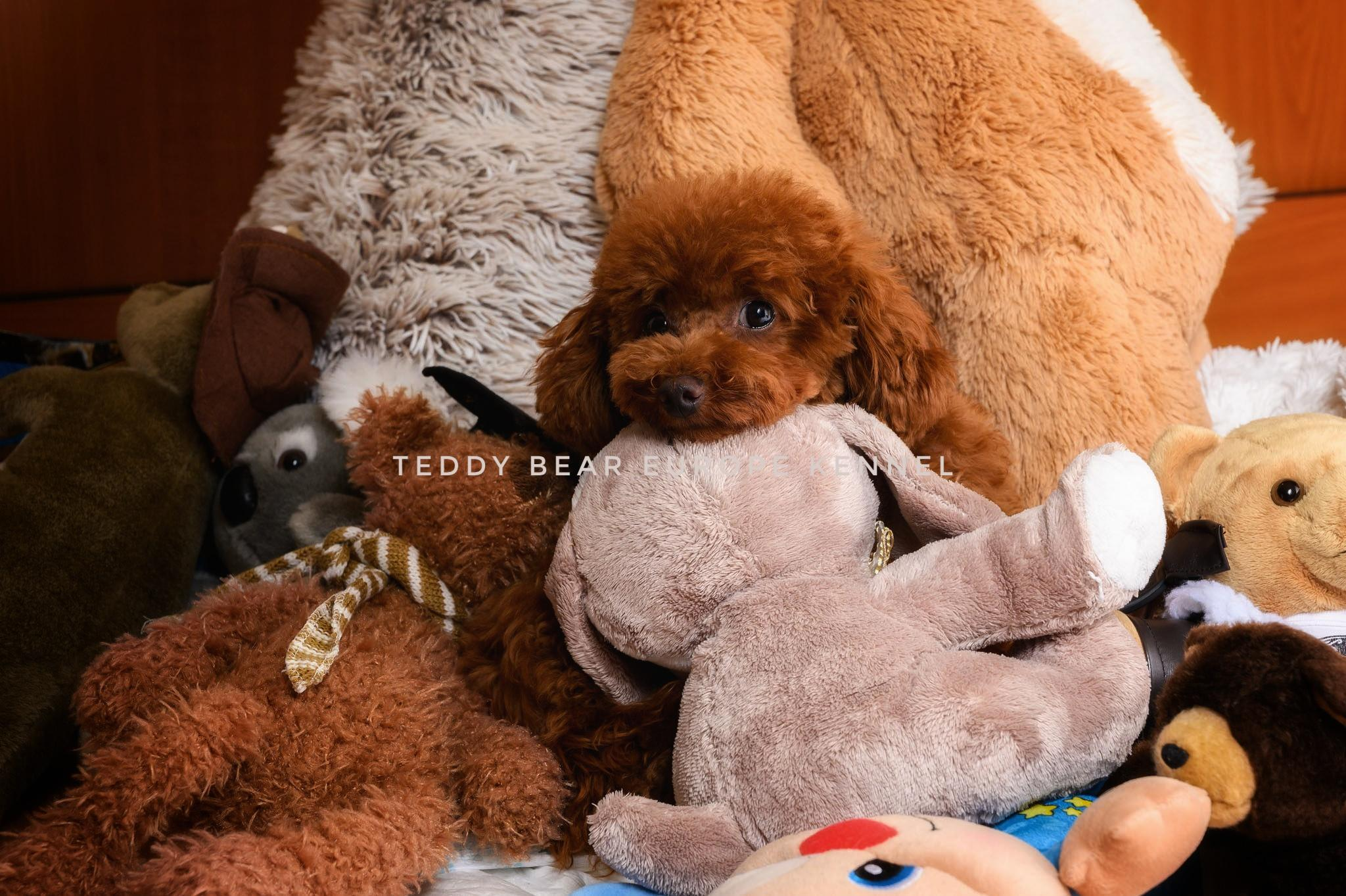 Teddy bear Toy uszkár plüss állatokkal