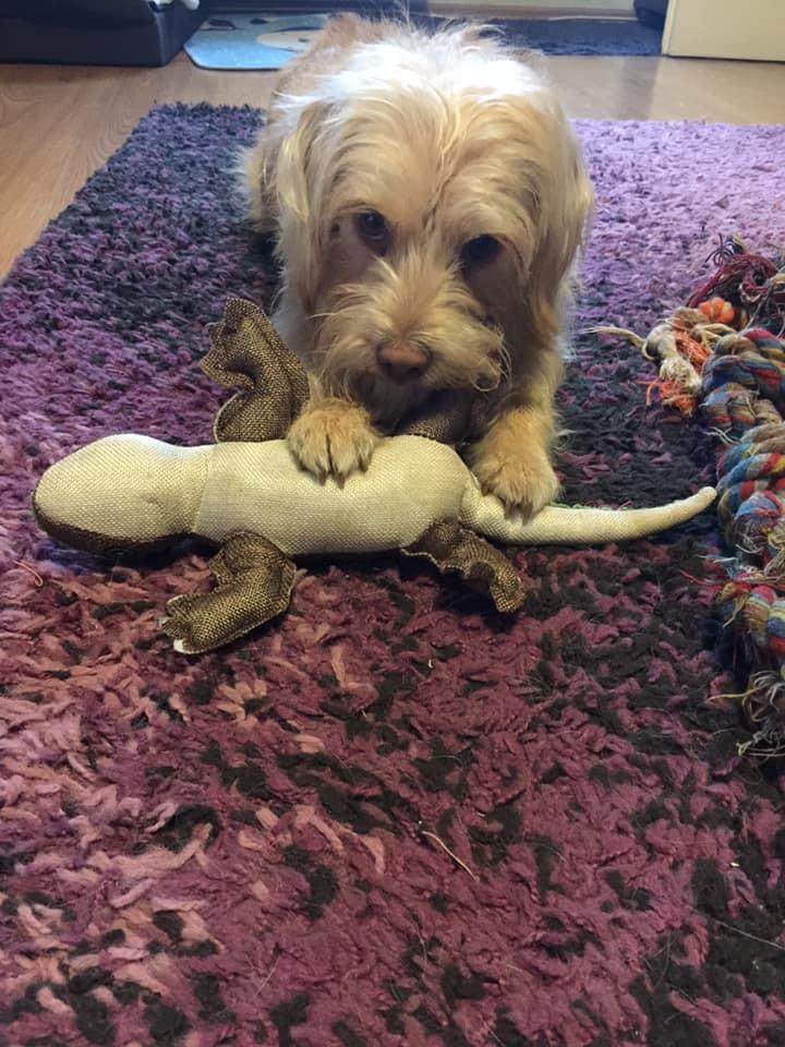 Mentett kutya új otthonában