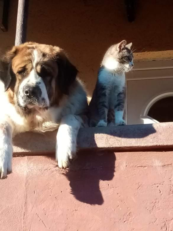 Kismacska kutyamamájával