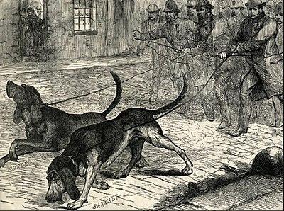 1888.-as véreb ábrázolás_forrás: wikiwand.com