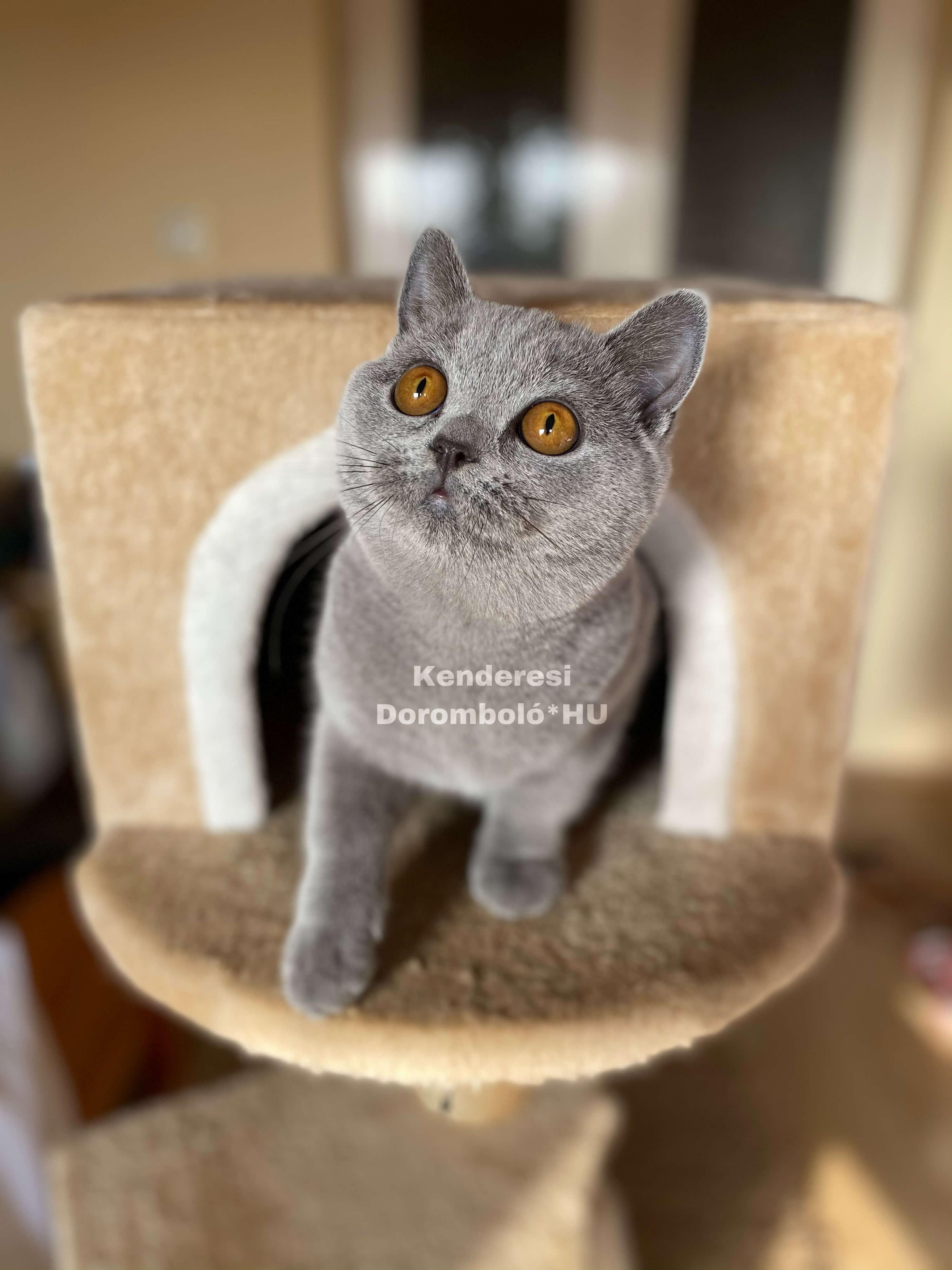 Brit cica a cicaházban