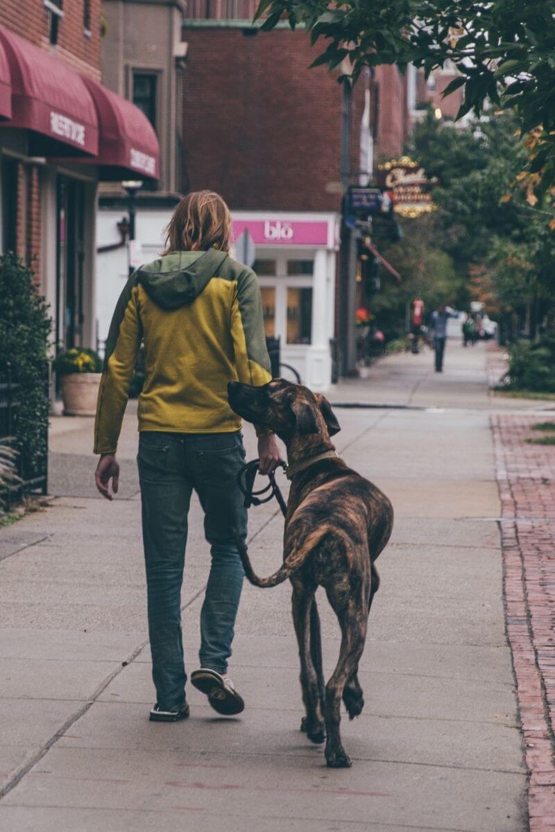 Kimondottan nagytestű kutyáknál gyakori a diszplázia