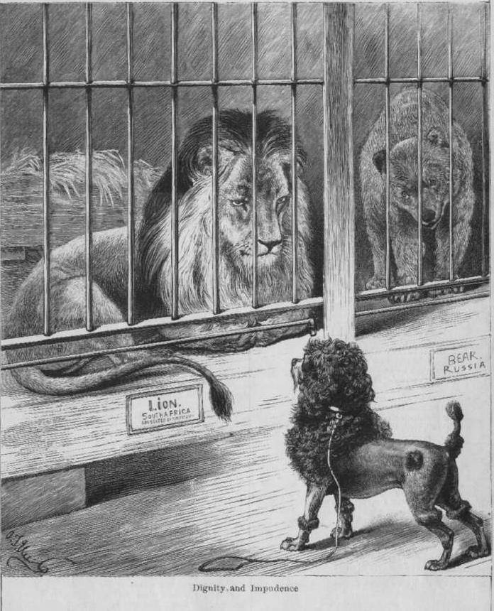 Az uszkár sokáig cirkuszi szerepléseiről volt híres