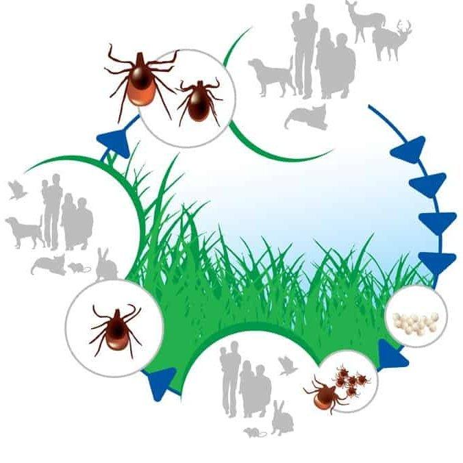 ahol lehetnek parazitak az emberi testben